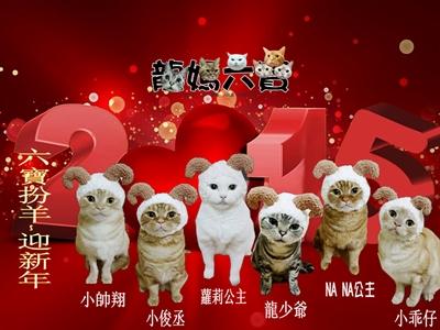 募集:最萌寵物粉絲團 PuddingLI
