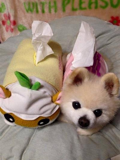 募集:最萌寵物粉絲團 安倫蔣