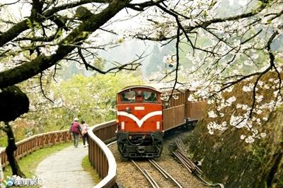 【2016 櫻花祭】全台最佳賞櫻地點大募集 Yu Lin