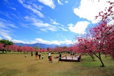 【2016 櫻花祭】全台最佳賞櫻地點大募集 MinHomeLin