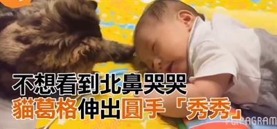 最療癒的動物影片 安琪 黃