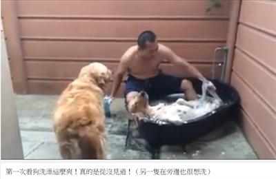 最療癒的動物影片 妙宜 吳