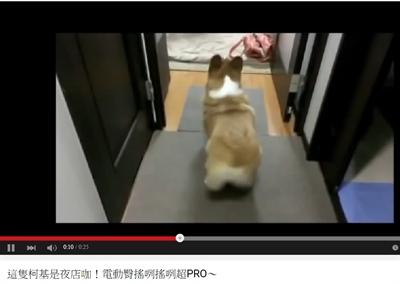 最療癒的動物影片 筱鴻 吳