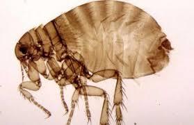 辦公室の蟲蟲危機 凃文耀