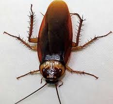 辦公室の蟲蟲危機 緹 花