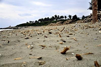愛地球做環保大家一起淨灘去! ClYu