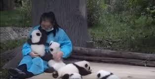 兒時的夢想 ~ 你最憧憬的行業 安琪 黃