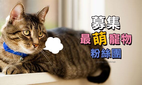 募集:最萌寵物粉絲團