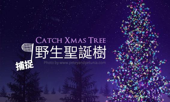 捕捉全台野生聖誕樹