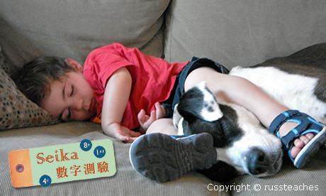 【Seika-數字占卜】寵物與我