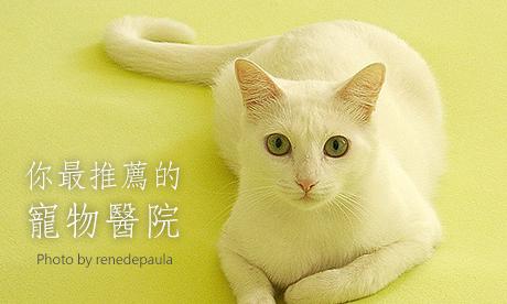 心愛寵物生病了!優質寵物醫院粉友來推薦