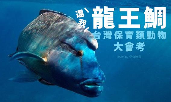 【粉多小學堂】還我龍王鯛,台灣保育類動物大會考