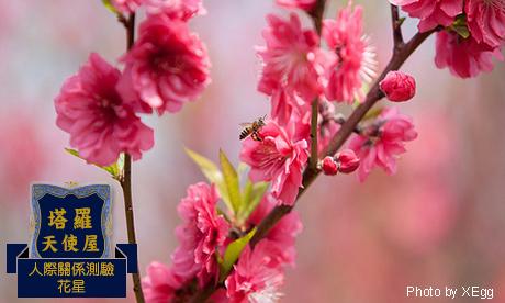 【花星-塔羅】我的桃花場所