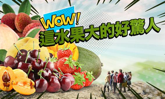 哇!這個水果大的好驚人!