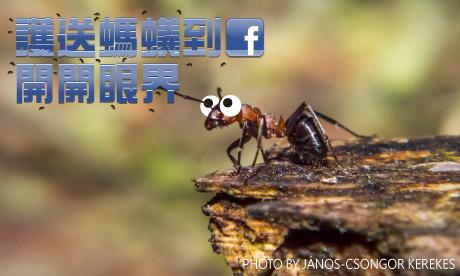 【粉多好心腸】護送螞蟻到FB開開眼界