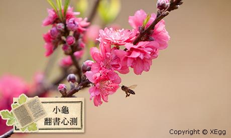 【小龜-翻書心測】近期的桃花運勢