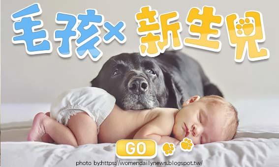[寶寶大會考]斷開毛孩與新生兒共存的迷思